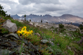 Arnica grows along the trail through Little Five Lakes. The Kaweah Range Ridge looms in the background.